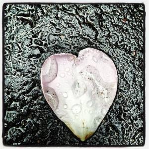 hjerteblad i regn