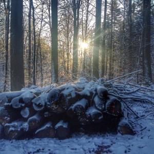 Skoven_december