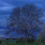fugl træ regn