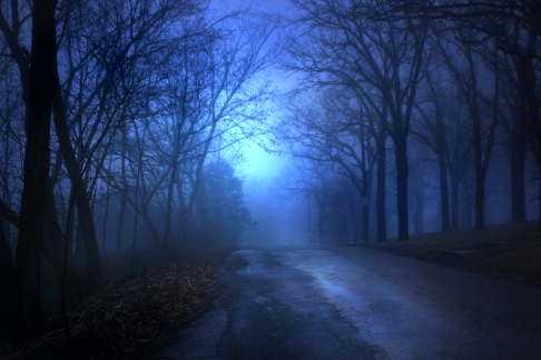 night-in-the-woods