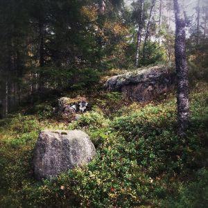 skoven_sverige