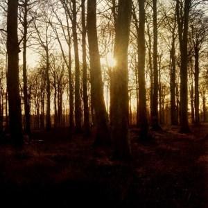 solmellemtræerne