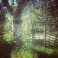 Gotland garden