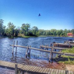 bird, boats, blue