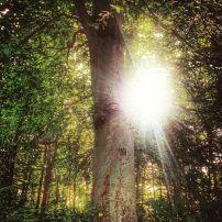 træetoglyset