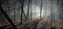 woods-autumn