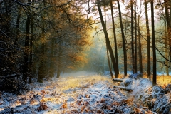 mysterius-forest_winter