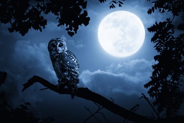 owl-in-the-night