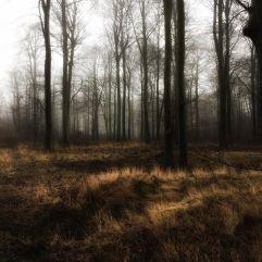 i-skoven_januar