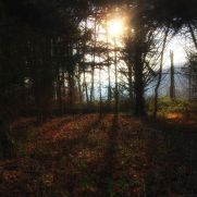 lys-i-skoven_januar