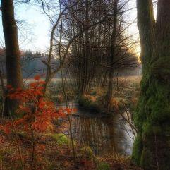 skoven-i-sverige