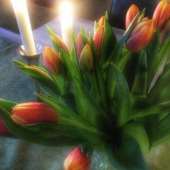 tulipaner_januar