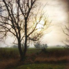 february-light_imbolc
