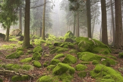 forest-stones