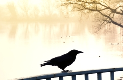 raven-and-misty-lake