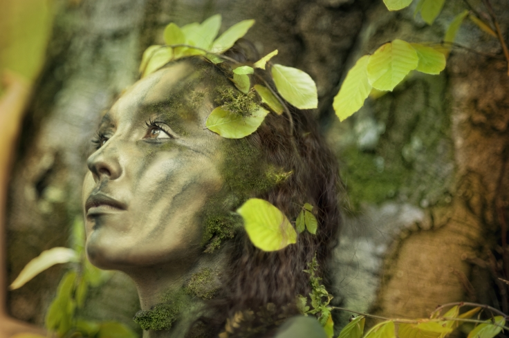 tree-soul