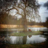 Træet og åen