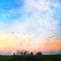 Fugle i pastel_aften