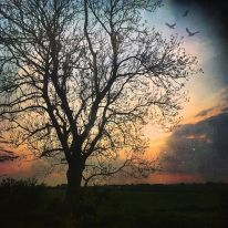trees and birds_night