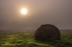 Early morning_harvest