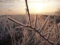 november frost