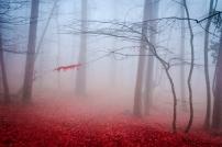 Misty autumn dusk