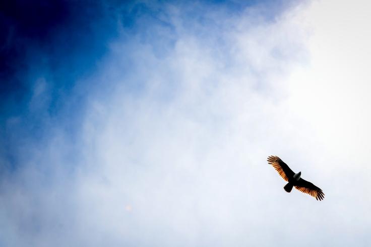 Eagle Sky