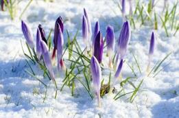 Imbolc spring