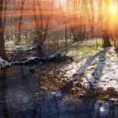 Skovbund sol