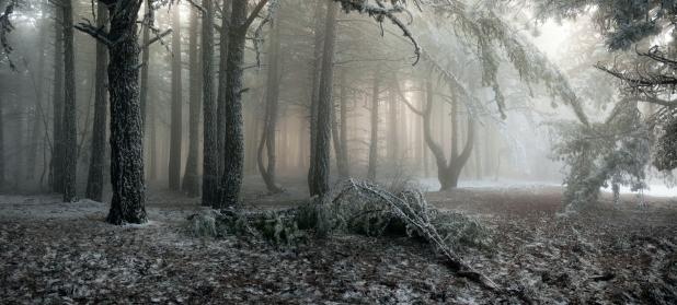 Vinter skov vildnis