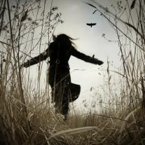 Follow the Raven