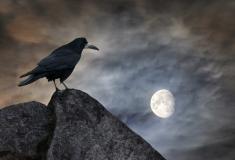 Raven Full Moon