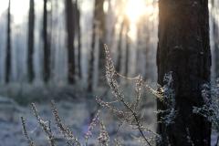 Winter Spider Web