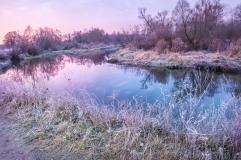 Purple autumn winter