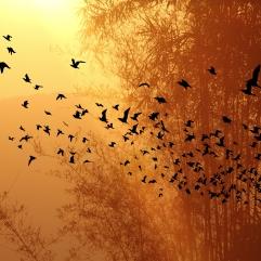 Tree birds