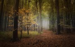 Autumn darkness woods