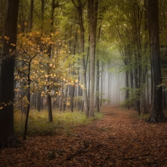 Autumn darkness woods