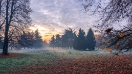 Autumn_first frost