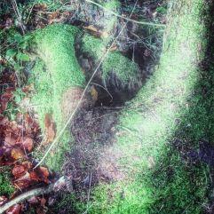 træetsfod