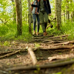 Two women hiking together through woodland in a low angle view of them approaching across a footpath with roots and branches