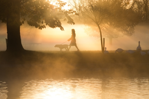 woman walking dog in early morning mist in autumn fall with sunlight in background