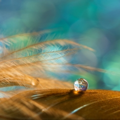 A drop on the golden feather of the bird on an emerald background. Beautiful stylish macro