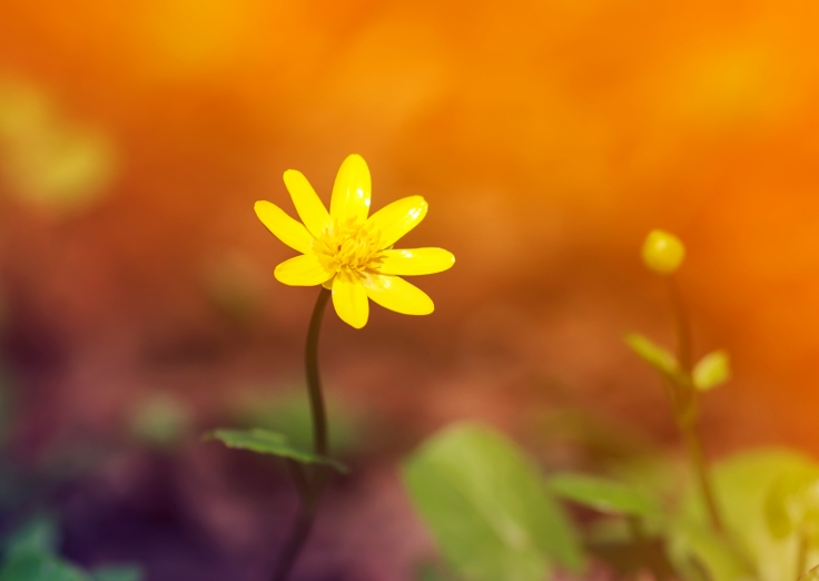 Gul blomst