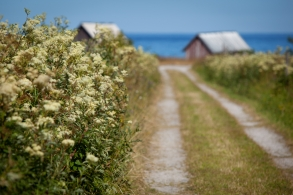 Small road going down to the ocean with summer flowers growing on the side of the road.GN