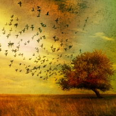 Birds Tree Autumn