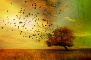 Birds Tree Autumn