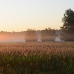 The sun illuminates the mist creeping through the grass in the early morning in August