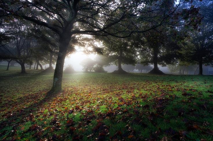 Morning trees autumn