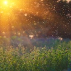 Sommereng sol