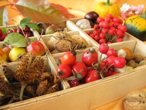Efterårs frugter svampe bær